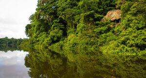 Jungle experience of Guatemala